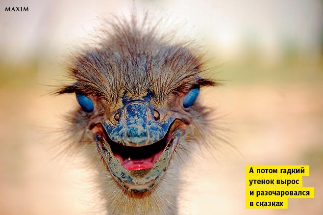Фото №6 - Лики рыл. 10 фотографий, на которых животные строят рожи