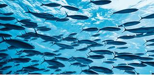 Ученые зарегистрировали самый громкий звук океана: это оказалась оргия рыб