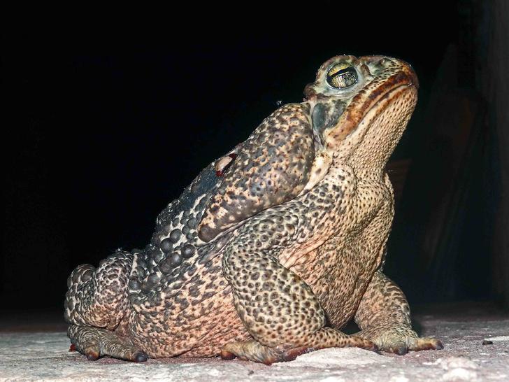 Фото №14 - 20 лучших фото жаб всех времен и народов!