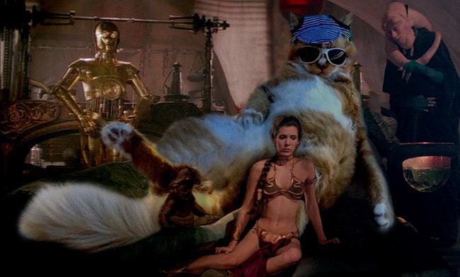 Фото №3 - Балдеющий кот — новый король фотожаб!