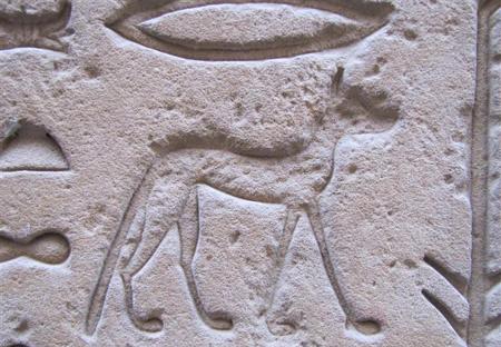 История расселения котов: от домов египтян до твоих тапокИстория расселения котов: от домов египтян до твоих тапок