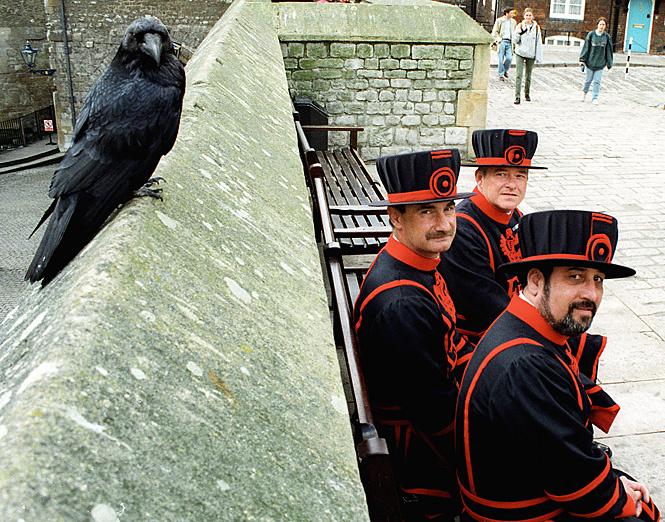 Как человек дружит с воронами