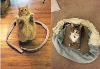 Кот обязательно сядет в круг! Попробуй на своем коте
