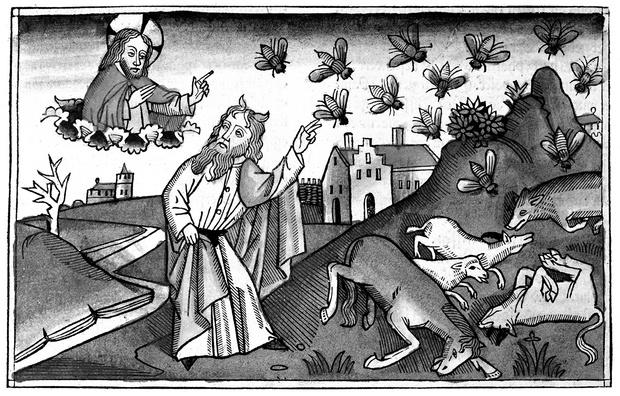 Фото №9 - Слабоумие и отвары: чем лечились от всяких холер наши предки до изобретения анальгина иалка-зельтцера