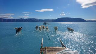 Твит дня: собачья упряжка везет сани по растаявшему леднику в Гренландии