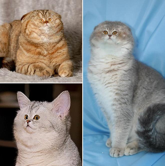 Фото №10 - Коты с крошечными мордами!