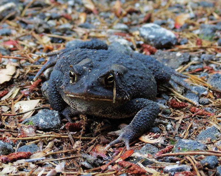 Фото №10 - 20 лучших фото жаб всех времен и народов!