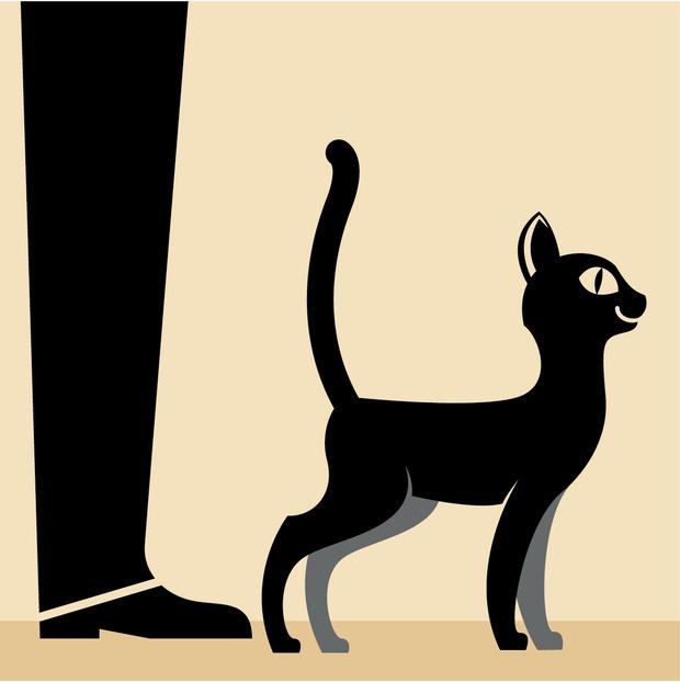 Фото №1 - Как понять язык кота: Краткий человеко-кошачий словарь