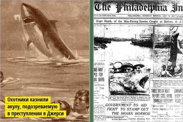 Фото №3 - Рыба-Гитлер. Исчерпывающий материал об акулах, после которого ты больше никогда не поедешь на море или океан