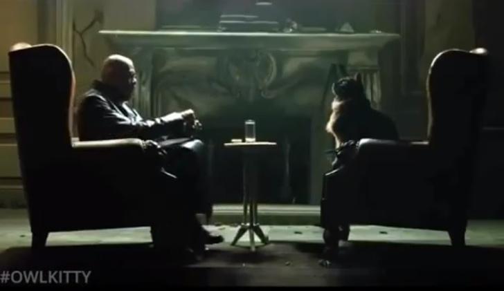 Фото №1 - Монтажер продолжает вставлять в фильмы свою кошку — и это по-прежнему очень смешно (видео)