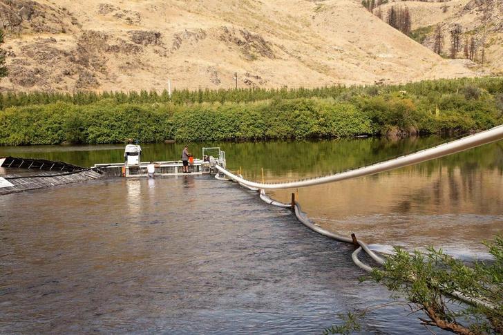 Фото №2 - Видео скоростного тоннеля для рыбы стало вирусным