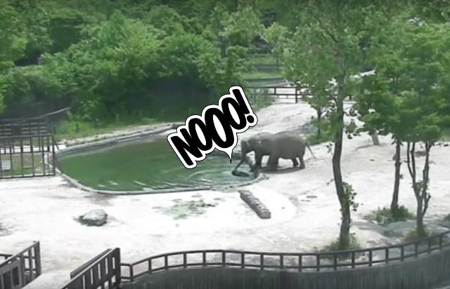 Фото №1 - Пожалуй, лучшее видео со слонами в 2017 году!