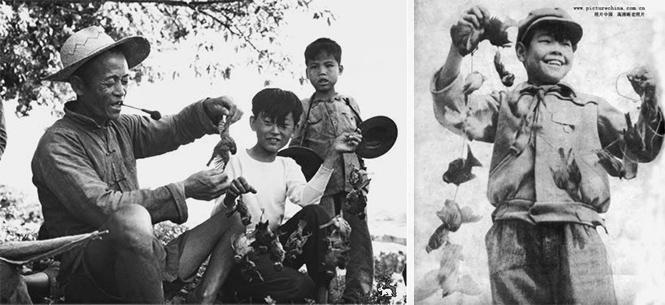 Фото №2 - Китайские плакаты, агитирующие убивать воробьев