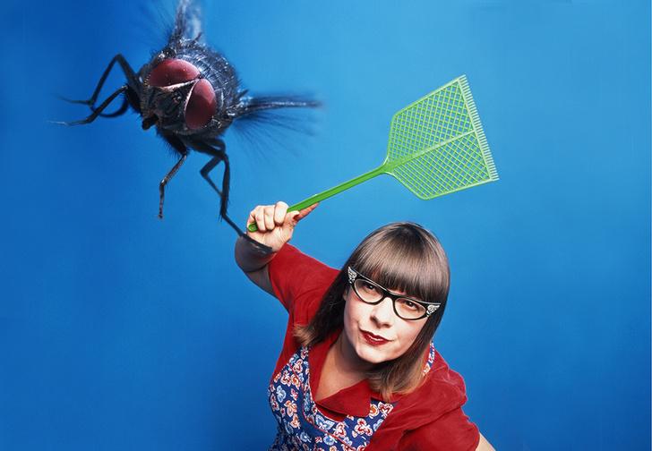 Фото №1 - Почему мухи летают по квадратной траектории, а не кругами?