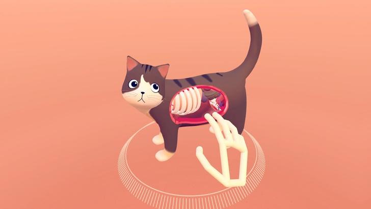 Фото №1 - Приложение на выходные: посмотри, что внутри твоего кота (ВИДЕО)