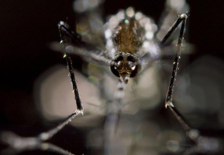 Фото №1 - Москитный флот: 5 важных фактов о комарах
