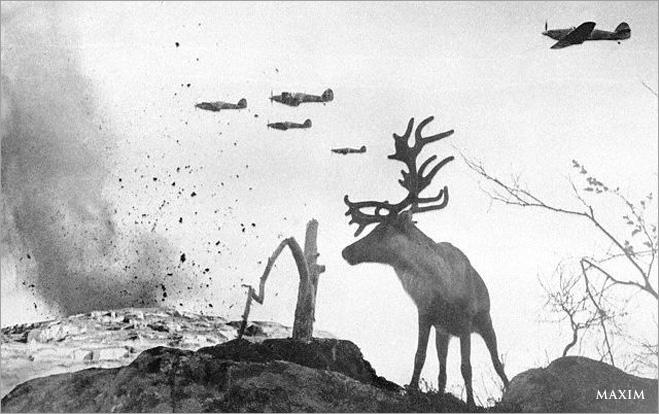 Фото №8 - Зверский героизм: горящие свиньи, противотанковые мыши и другие животные, повлиявшие на исход ВОВ
