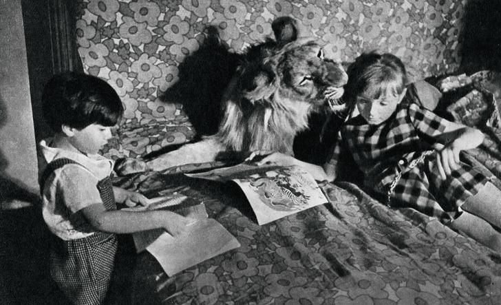 Фото №10 - Крупный домашний кот: как человечество пыталось приручить больших кошек
