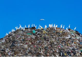 Легализация отходов: краткая история мусора от древности до наших дней