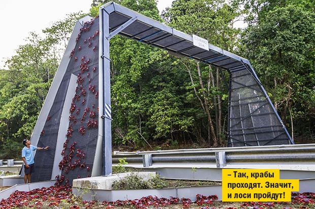 Фото №11 - 15 самых-самых мостов