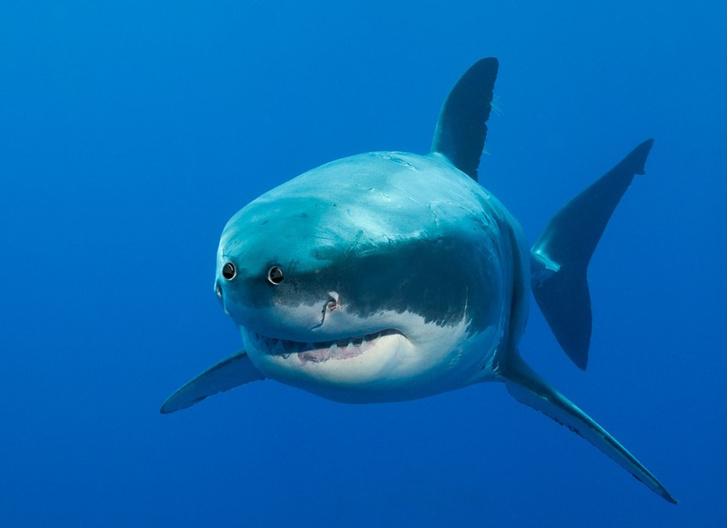 Фото №4 - Вот как выглядели бы животные, если бы глаза у них были спереди!