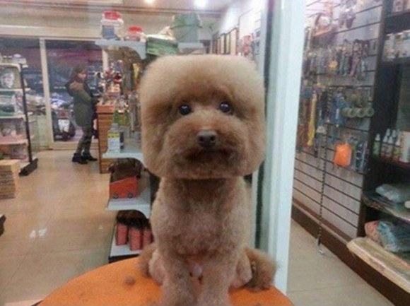 Фото №1 - Новый тренд на Тайване: геометрически правильные собаки