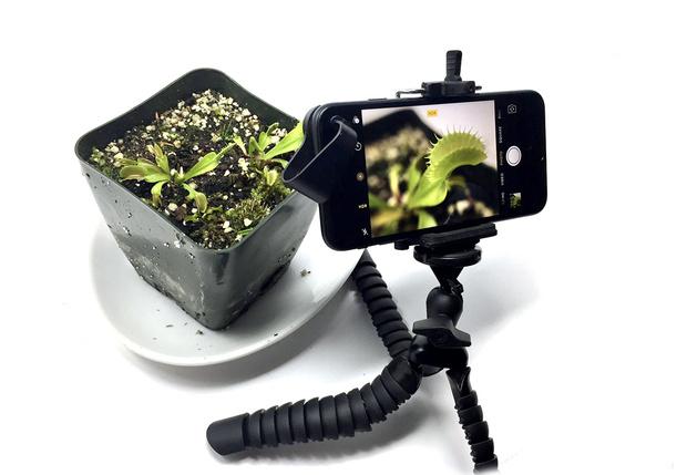 Фото №1 - Как заснять рост растения на видео