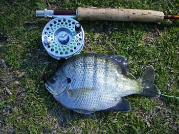 Фото №1 - Игры для рыб и не только