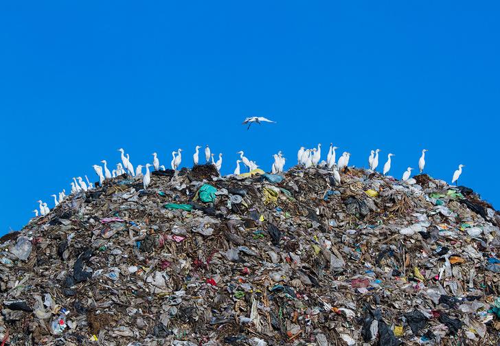 Фото №1 - Легализация отходов: краткая история мусора от древности до наших дней