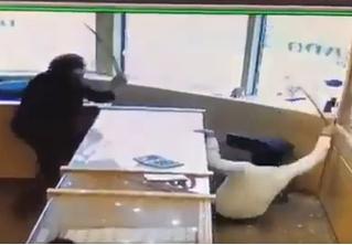 В Канаде работники ювелирного магазина отбились от грабителей мечами (видео)