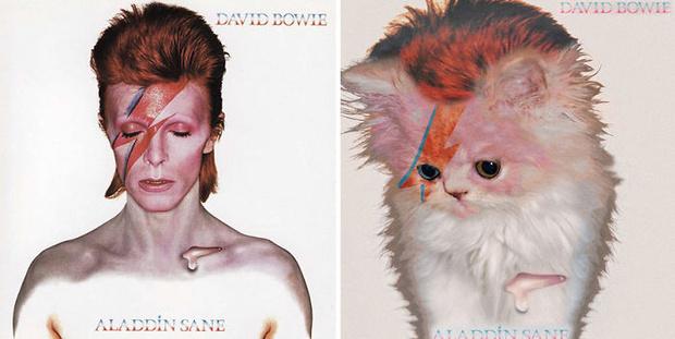Фото №1 - Посмотри, как будут выглядеть обложки легендарных альбомов, если заменить музыкантов на котов!