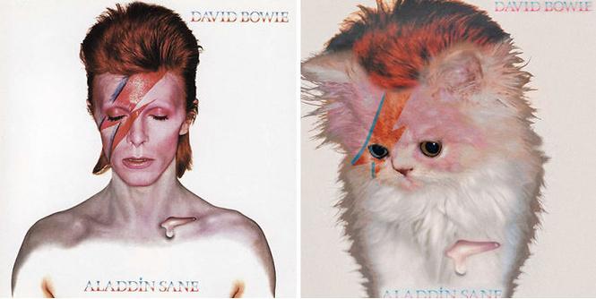 Посмотри, как будут выглядеть обложки легендарных альбомов, если заменить музыкантов на котов!