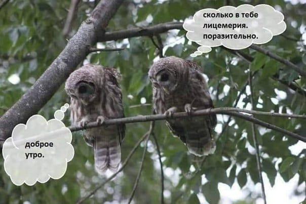 Фото №1 - Самые смешные картинки недели и Вахтанг Меркьюри