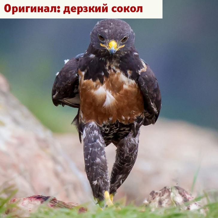 Фото №3 - Лучшие фотожабы года!