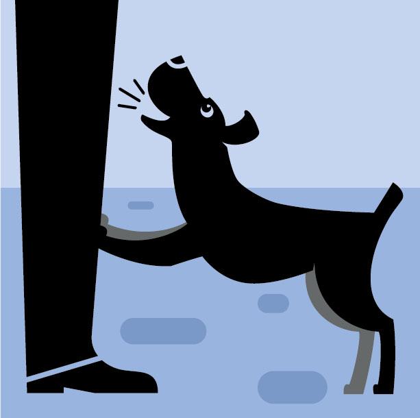 Фото №5 - Как понять язык собаки. Краткий человеко-собачий словарь