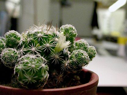 Фото №3 - Вырастить кактус