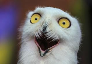 Долгий взгляд глаза в глаза может вызывать галлюцинации!