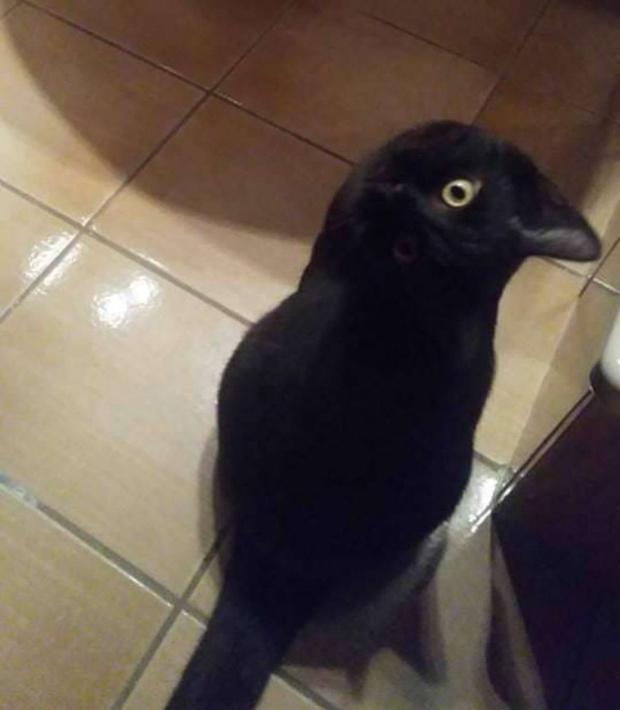 Фото №2 - Новая оптическая иллюзия заворожила Интернет: Очень Странная Ворона