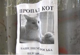 Российская оптическая иллюзия с объявлением про пропавшего кота покорила мировой Интернет!