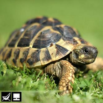 Фото №14 - Как выбрать домашнее животное в зависимости от типа твоего характера и размеров жилплощади