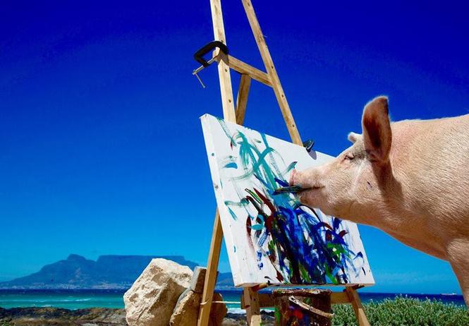 познакомься свиньей-художником чьи картины продаются тысячи долларов штуку