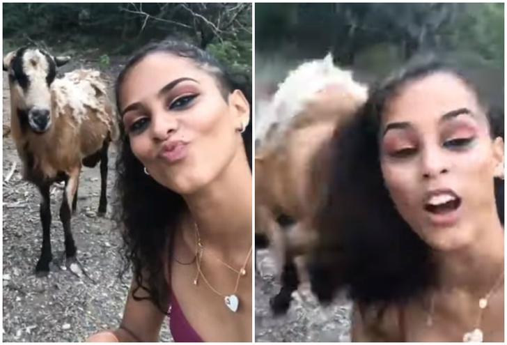 Фото №1 - Коза боднула девушку в голову, когда та пыталась сделать с ней селфи (видео)