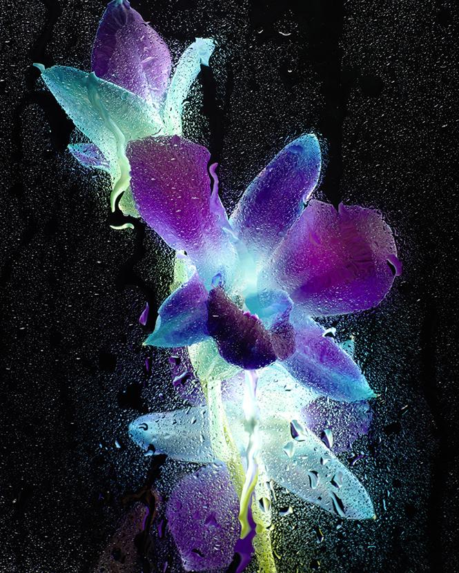 Фото №2 - Как сделать светящиеся цветы