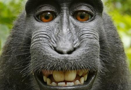 Суд отказал обезьяне. Теперь окончательно