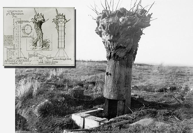 Фото №1 - Фальшивое дерево — наблюдательная вышка времен Первой мировой