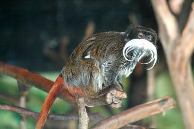 Фото №3 - 10 самых необычных животных