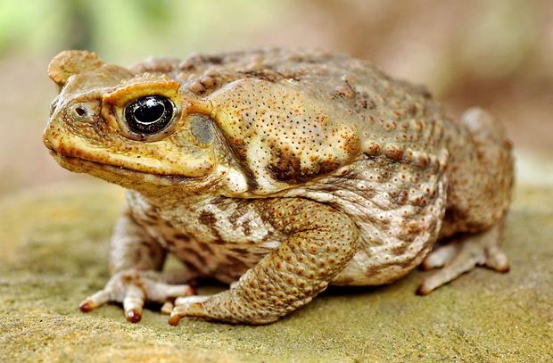 Фото №19 - 20 лучших фото жаб всех времен и народов!