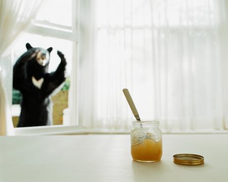 медведь и мед