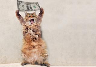 Как заработать на котиках
