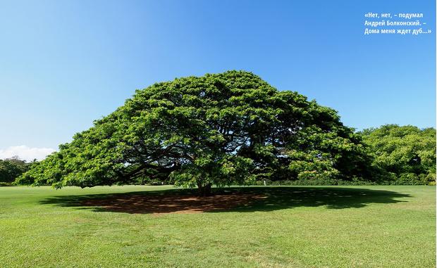Фото №1 - Как выглядит то самое дерево, которому компания Hitachi выплачивает пенсию